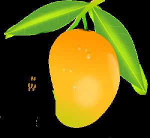 mango1-300x276